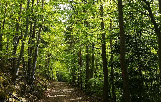 Dans les bois du Chirat Blanc