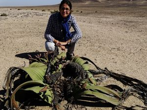 Welwitschia Mirabilis on the way