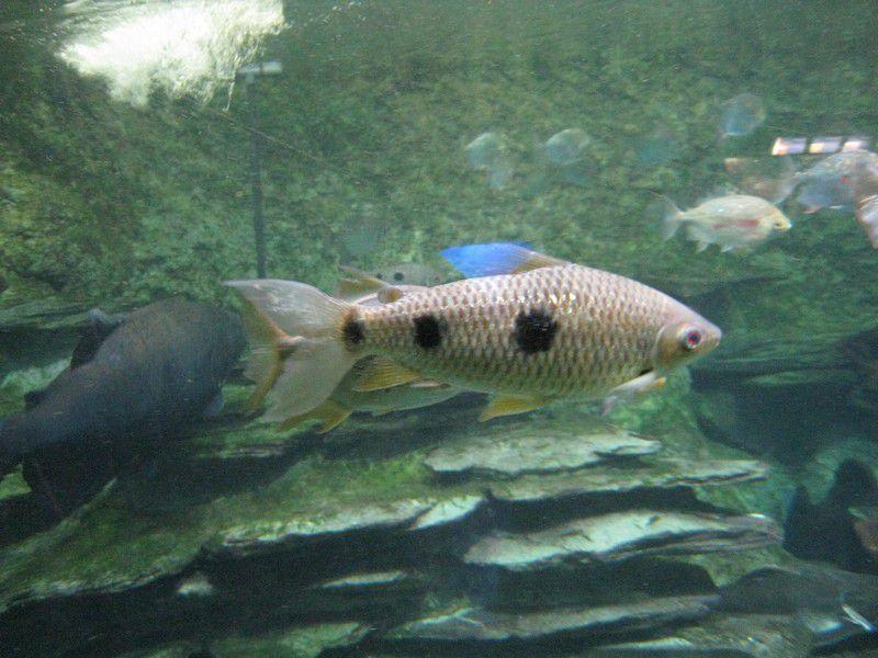 Aquarium de la Porte Dorée, Paris 12e