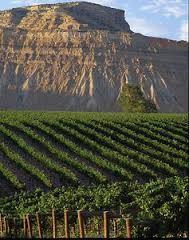 Viticulture au Colorado