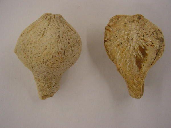 <p> Des trilobites ordoviciens aux requins miocènes, voici l'essentiel des fossiles de l'Anjou, de la Touraine et du Poitou. </p> <p> Tous appartiennent à ma collection privée. </p> <p> Bonne visite ! </p> <p> Phil « Fossil » </p>