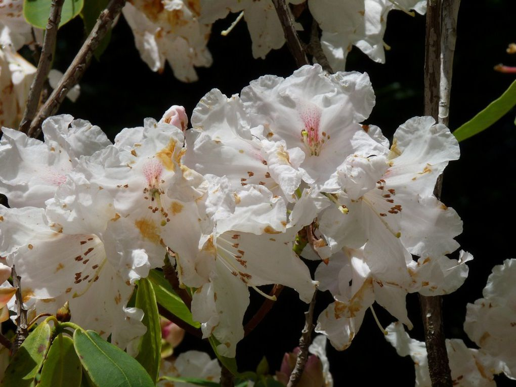 Fleurs 46