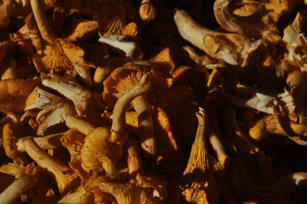 Gros plan sur les champignons à vendre. (5 photos)