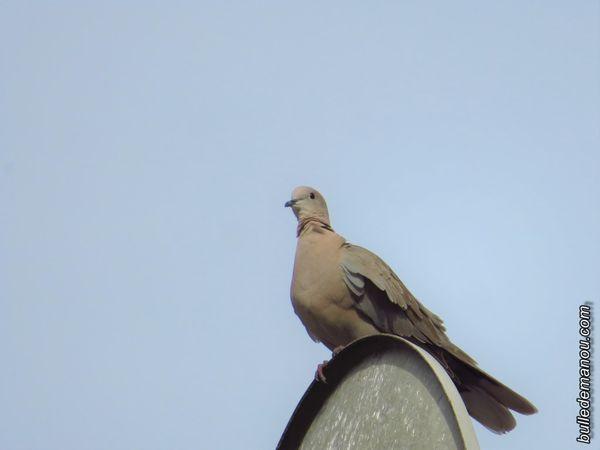 La voici le soir, sur la parabole de mes voisins...