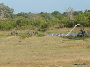 Safari dans la réserve nationale de Yala