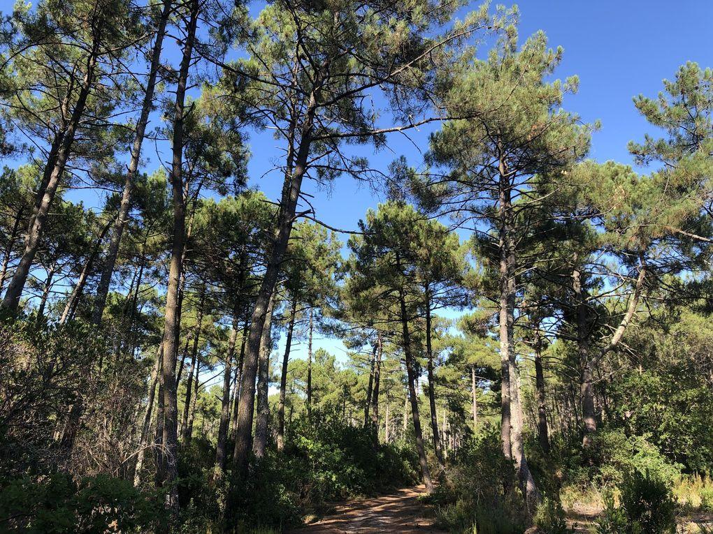 Petite randonnée au Cap-Ferret. Août 2019.