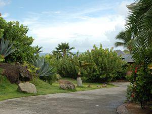 Palmier royaux - Allamanda -Cocotiers -Agaves