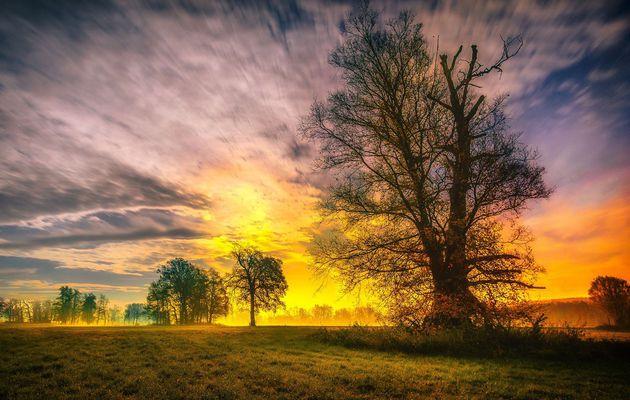 Les trois arbres... ou la réponse à nos prières