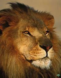 Symbole du lion dans la bible