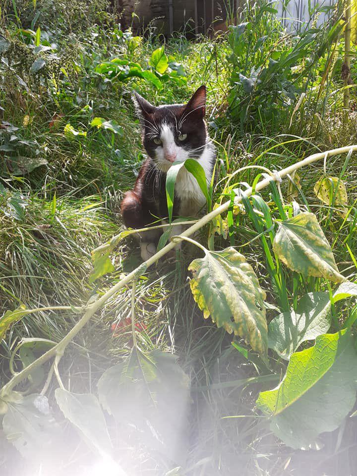 A l'adoption : Minou
