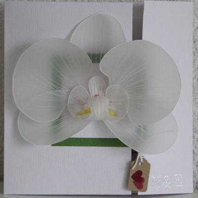 orchidée en calque