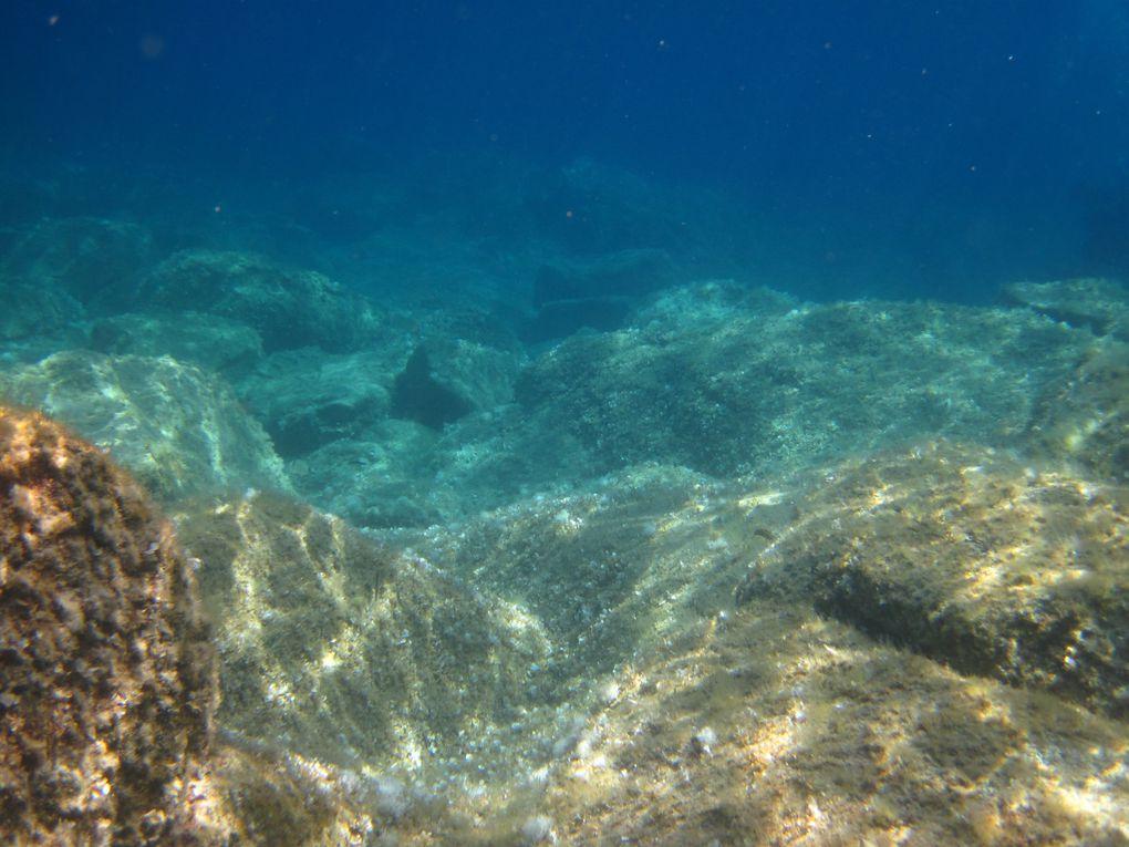 poissons du monde sous marin