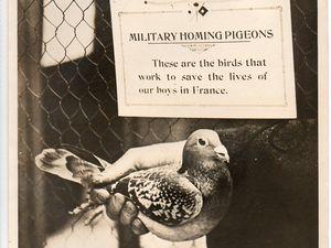La pigeon Carrier