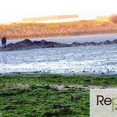 Algues vertes en Bretagne : 4 points pour comprendre le problème