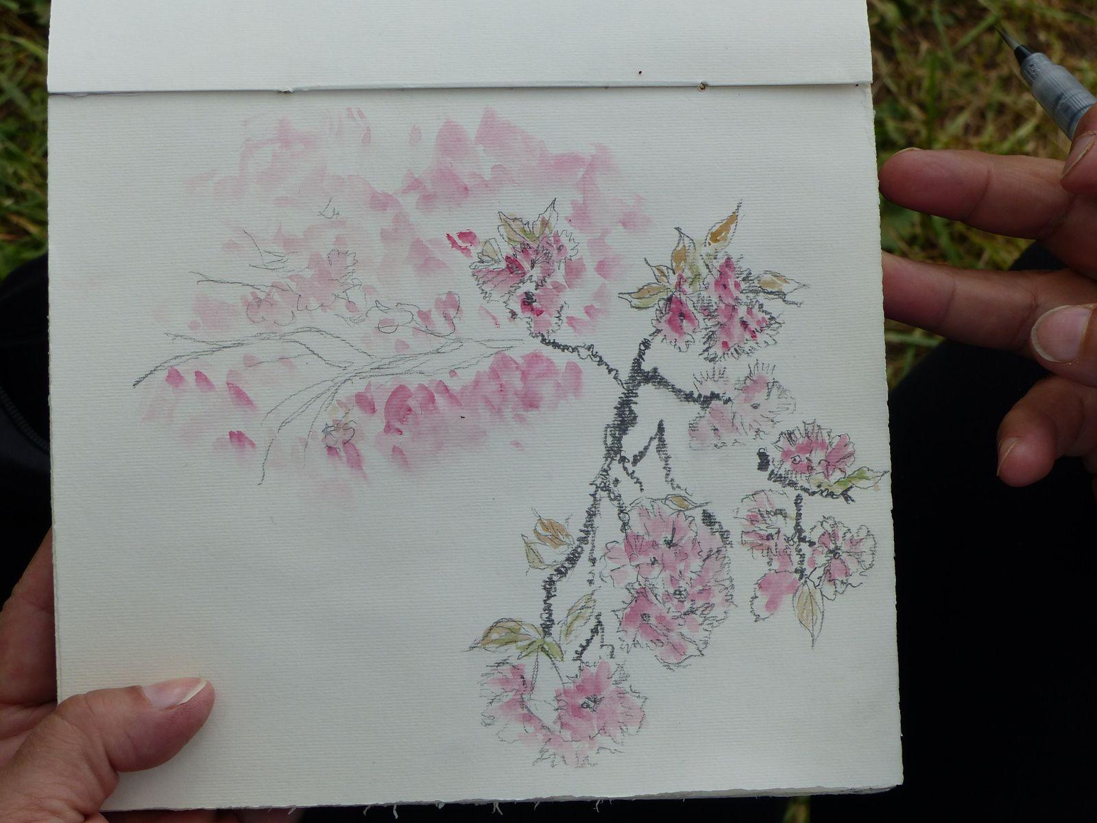 Des dessins et des cerisiers en fleurs