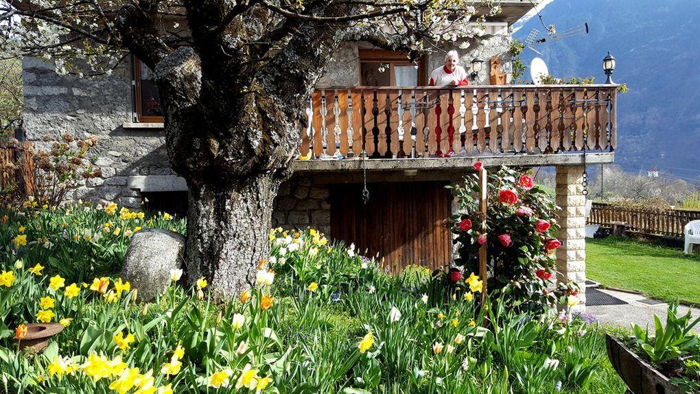 Maison du village avec une superbe floraison de printemps, massifs de camélias et corbeille d'argent.