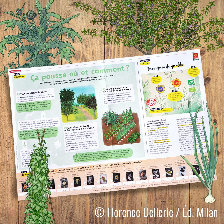 Mes illustrations dans le magazine 1Jour1Actu !