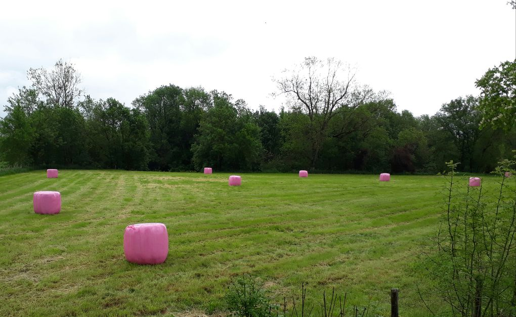 - land art in Aunac-sur-Charente -