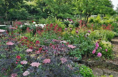 Zur Zeit tolle Blütenpracht in den Gärten am Mainufer und in der Mainuferpromenade