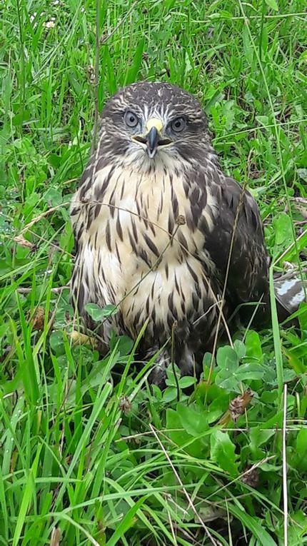 Magnifique specimen dont on a rarement la chance de pouvoir approcher d'aussi près !!