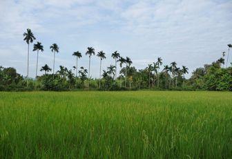 Immersion au coeur de la campagne cambodgienne