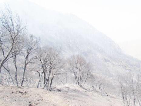 Merville Algerie La neige la montagne les torrents une source de vie