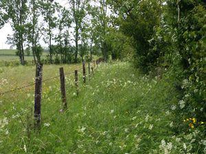 Finalement nous sommes plus mouillés des hautes herbes que de la pluie qui se raréfie.