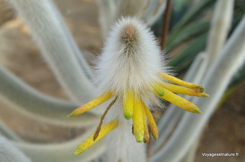 La Cactuseraie de Creisméas (29)