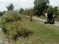 Chantiers de broyage sur Rochefort et Marrans