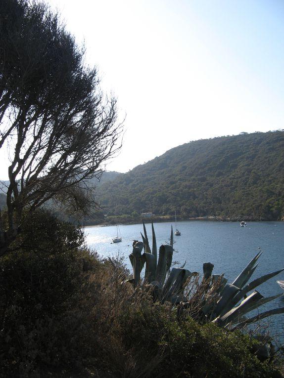 PORT-CROS - Parc National - une des 3 Îles d'Or