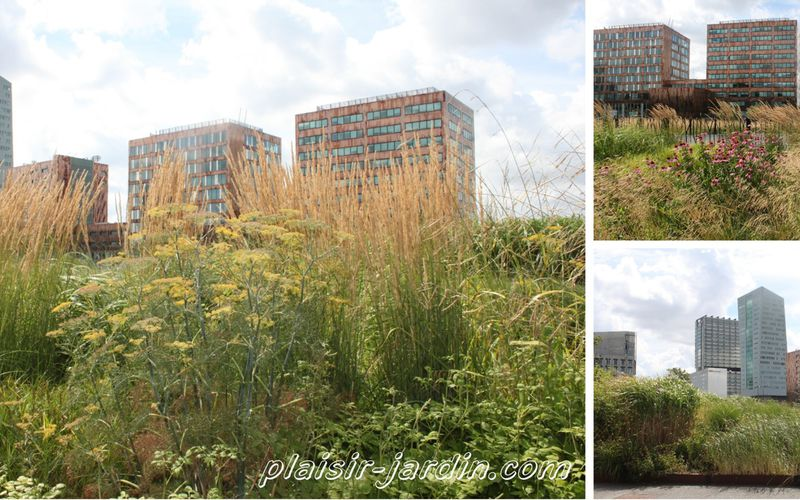 Visite du Jardin des Géants à Lille