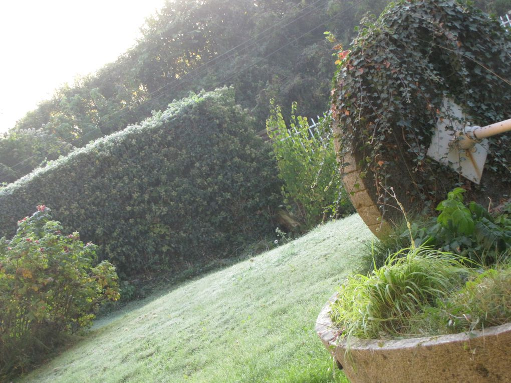 Album - d-co-jardin