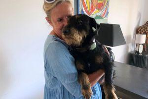 Un chien parcourt près de 380 km entre la Savoie et le Gard pour rentrer chez lui à Bezouce