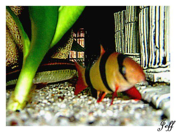 J'ai pris quelques photos des poissons de Valentin.