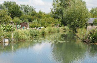 Les jardins des Marais de Bourges, un patrimoine en danger