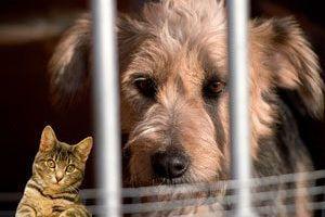 Adopter un petit compagnon ? Pourquoi choisir un animal dans un refuge plutôt que dans une animalerie... (de nombreux liens de refuges ci-dessous, dans toute la France)