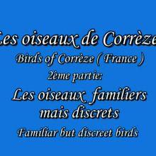 Les oiseaux de Corrèze #2. 2ème partie: Les oiseaux familiers mais discrets