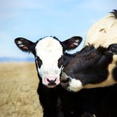 Mercy For Animals - Inspiring Compassion