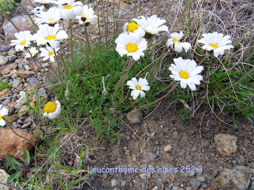 Album - 2013--Flore-Pyrenees