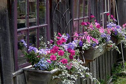 Windowboxes on a wea
