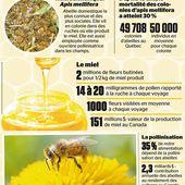 D'après un universitaire, c'est les flaques d'eau toxiques qui tuent les abeilles - MOINS de BIENS PLUS de LIENS