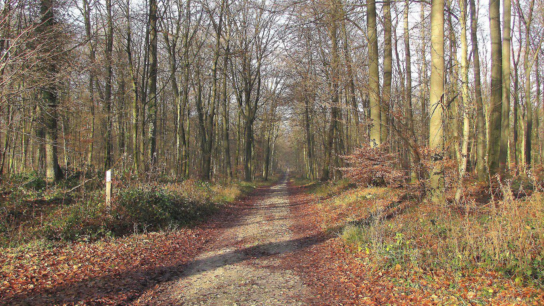 carrefour_GR12A_GR655_Route du Rond Buisson