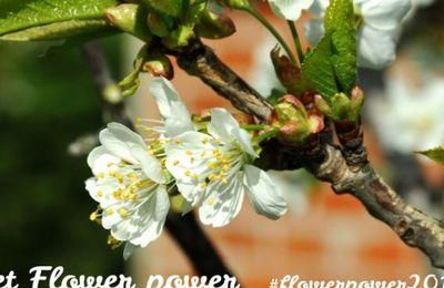 Le pouvoir des fleurs du lundi. 4
