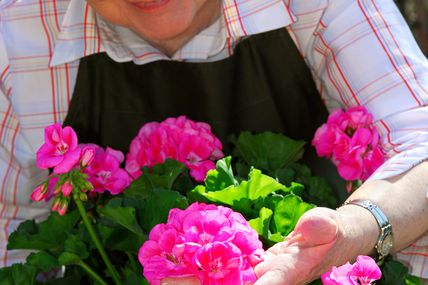 Senior woman gardening la couleur de nous