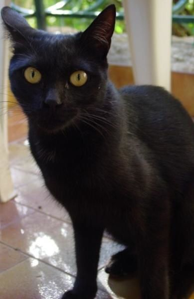 O'MALEY ET SA COMPAGNIE et Les chats noirs