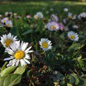 Jardinage à Frescati - les plantes sauvages -  Jardins merveilleux