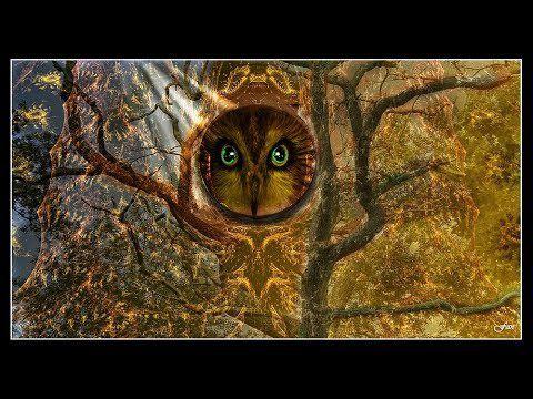 Esprit de la forêt...