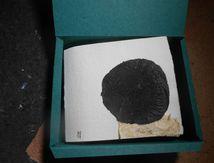 catalogue papier végétal