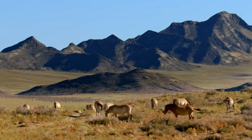 Les chevaux des Cavaliers yamnas