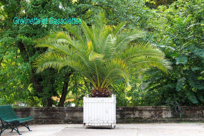 Le Jardin Botanique et les Serres d'Auteuil, troisième partie